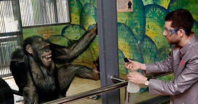 Маймуните в зоопарка в Екатеринбург започнаха да четат книги от скука по време на карантината