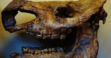 В Русия откриха костите на древен носорог стефаноринус