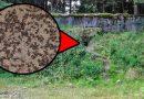 Тайната на мравките-канибали в съветските ядрени бункери