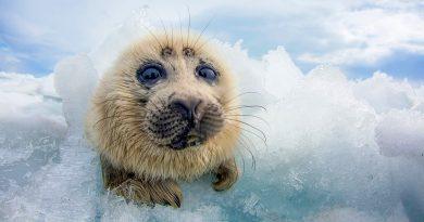 10 уникални снимки от дивата природа на Русия