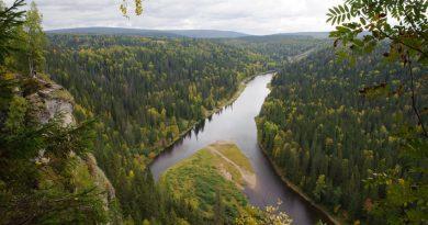В Русия попълват стратегическите горски запаси