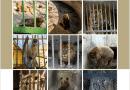 Защо през 2021 г. лъвове и мечки все още се отглеждат в лоши условия в български зоопаркове?