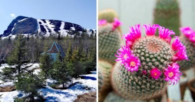 Защо руснаците построиха ботаническа градина в Арктика?